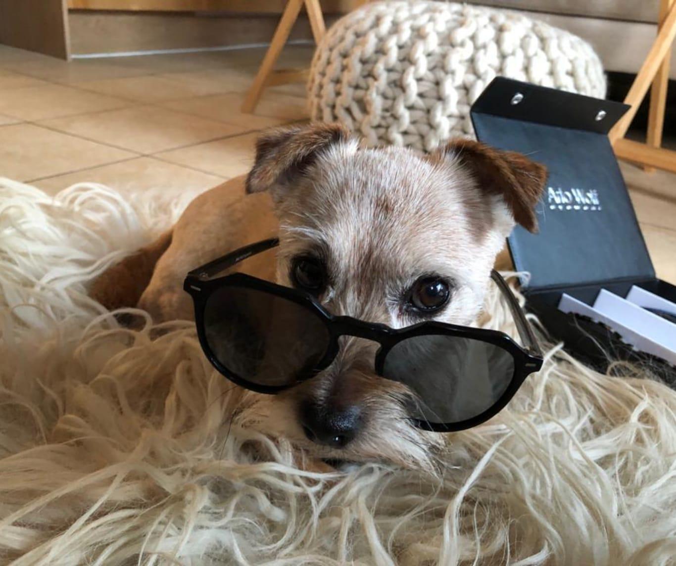 dog with Arlo Wolf sunglasses