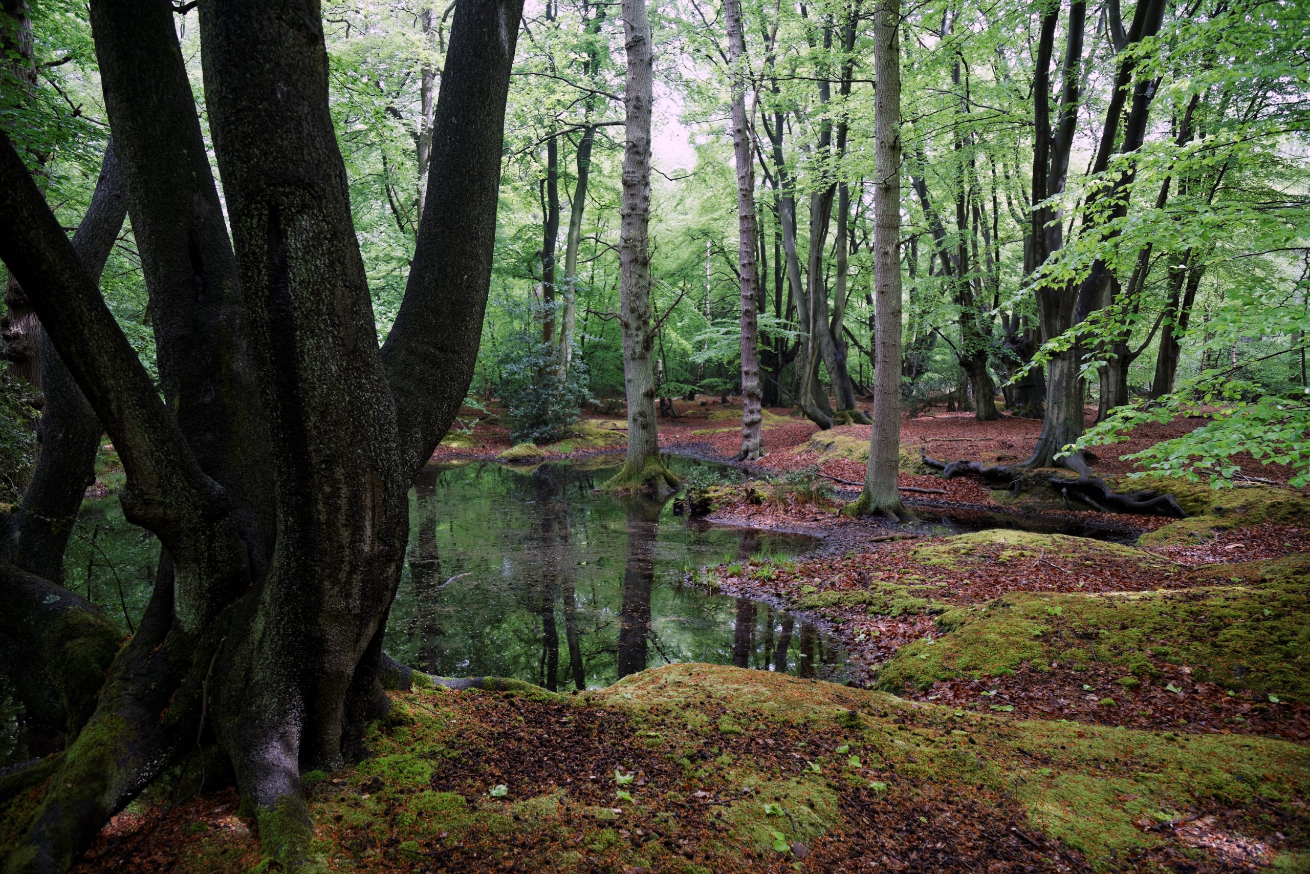 epping forest near london